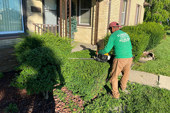 Hedges and Triming Services